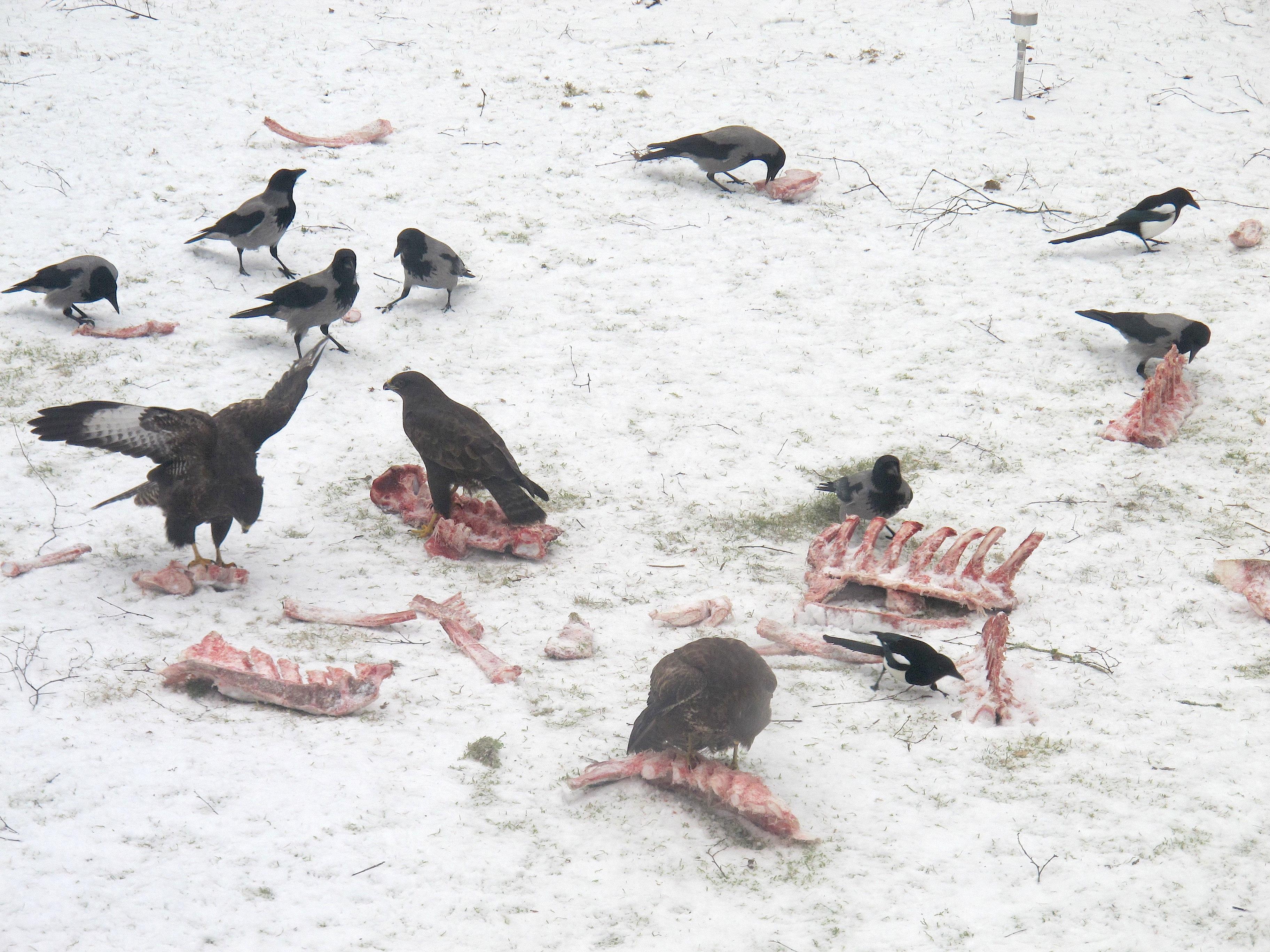 Fågelmatning